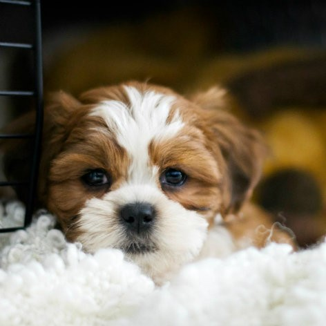 Dog Crates and Dog Pens - When to Use Them